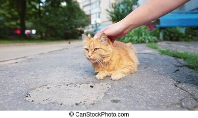Male hand closeup petting homeless cat that resting on the...
