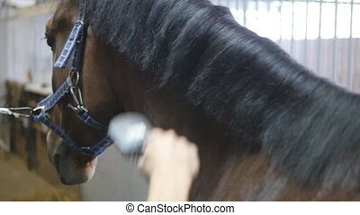 Male hand combing a black or brown horse mane in a stall....