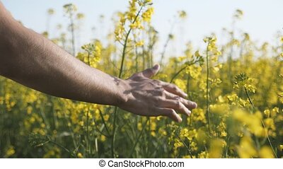 Male hand moving and touching the blossoming flowers of...