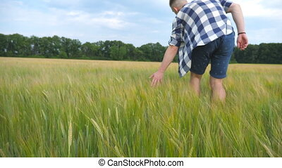 Male hand moving over wheat growing on the field. Meadow of...