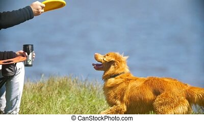 Male hand throwing frisbee for cute dog outdoors, slow...