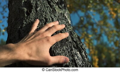 Male hand touches a tree trunk. Young man cares about nature and the environment, concept of man and nature. Clear autumn sky, birch trunk.