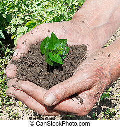 male handful of soil with green sprout