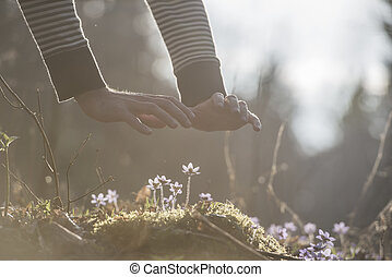 Male hands back lit by bright sunlight over a small spring flowers