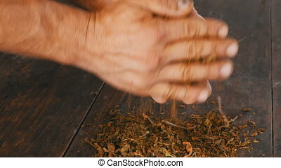 Male hands crumple dry leaves of tobacco on table - Male...