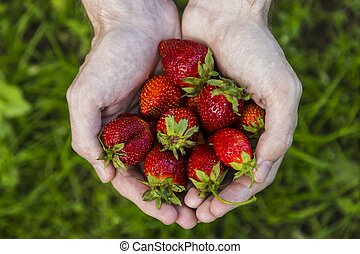 Male hands holding strawberries