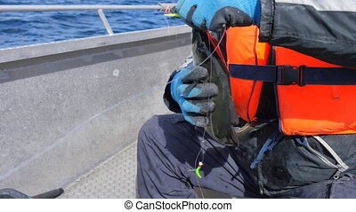 Male hands in blue working gloves remove fish from fishing...