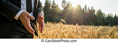 Male hands making protective gesture around a golden wheat ear