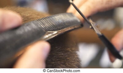 Male hands of hairdresser combing and cutting short hair of...