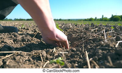 Male hands of young farmer caring about small green sprout...