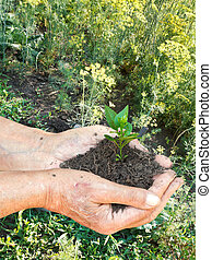 male hands with handful soil with green sprout