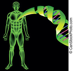 Illustration showing the male human DNA