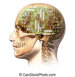 Male human head with skull and artificial electronic circuit brain in ghost effect, side view. Anatomy image, on white background, with clipping path.
