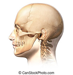 Male human head with skull in ghost effect, side view.