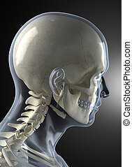 Male Human Head X-ray - Transparent skin concept