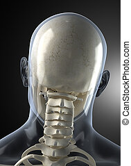 Male Human Head X-ray from back - Transparent skin concept