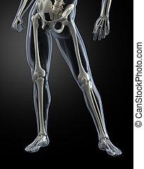 Male Human Legs X-ray