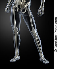 Male Human Legs X-ray - Transparent skin concept