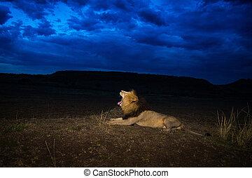 Male lion Scarface in Masai Mara