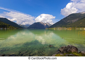 Male mallards swimming in Achensee lake in blue green shade ...