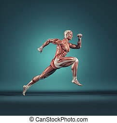 Male muscular system running. This is a 3d render ...