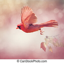 Northern Cardinal Flying ,watercolor painting - Male ...
