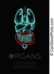 Male Organs X-ray set, Large Intestine infection concept idea red color illustration isolated glow in the dark background, with Organ text icon and copy space
