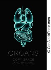 Male Organs X-ray set, Normal concept idea illustration isolated glow in the dark background, with Organ text and copy space