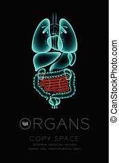 Male Organs X-ray set, Small Intestine infection concept idea red color illustration isolated glow in the dark background, with Organ text icon and copy space