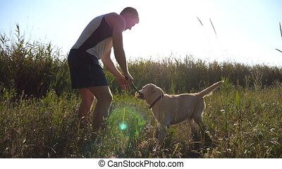 Male owner playing with his labrador or golden retriever...