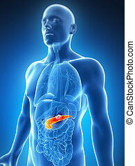 Male pancreas - cancer - 3d rendered illustration of the...