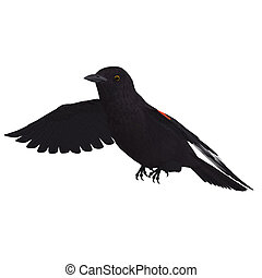 Male Red-winged Blackbird. 3D rendering with clipping path ...