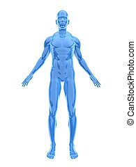 male reflection surface - 3d rendered illustration of a male...