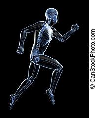 Male runner - 3d rendered illustration of a male runner