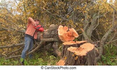 sawed, tree