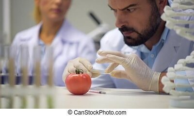 Male scientist looking at sample and injecting tomato with chemicals