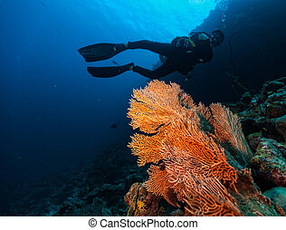 Male scuba diver underwater
