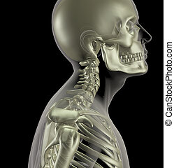 Male skeleton with close up of neck bones - 3D render of a...