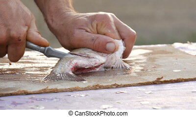 Male strong hands of a fisherman cleans freshly caught live fish cuts into large pieces freshwater crucian fish with a small knife on the table in a beautiful scenic sunset on nature.