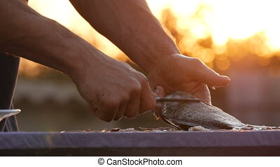 Male strong hands of a fisherman cleans freshly caught live fish from scales in a beautiful scenic sunset on nature.