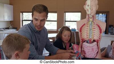 Male teacher teaching human anatomy in the class - Caucasian...