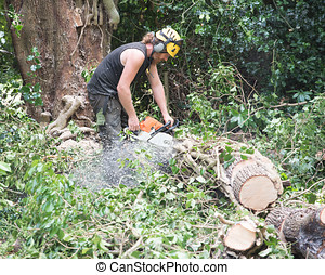 Male Tree Surgeon using a chainsaw on the ground
