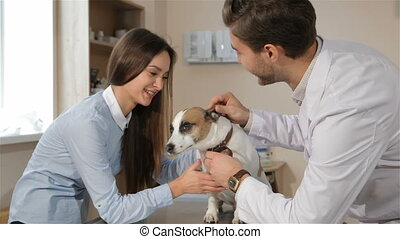 Male veterinarian checks up dog's teeth
