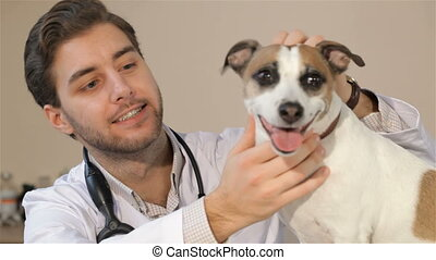Male veterinarian looking at the dog