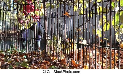 Male worker blowing leaves from residential house entrance path with leaf blower. Gimbal motion shot
