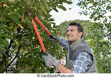male worker is trimming a tree