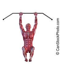 male workout - hanging leg raises