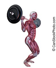 male workout - squats