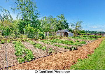 malerisch, bauernhof, kleingarten, bett, und, grünes haus