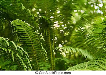 maleza, helecho, vista, cima, bosque, thickets, fondo